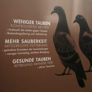 Betreuter Taubenschlag Köln Hansaring der Kölner Taubenhilfe
