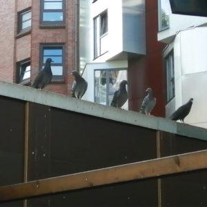 Innenbereich Taubenhaus der Kölner Taubenhilfe