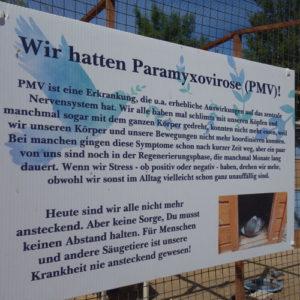 PMV Viruserkrankung bei Tauben