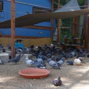PMV Voliere der Taubenhilfe Köln