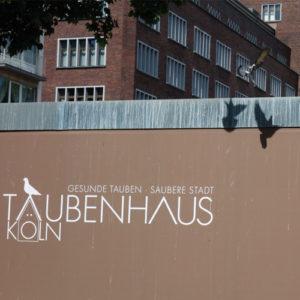 Tauben auf dem Taubenhaus der Taubenhilfe Köln