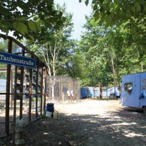 Taubenhilfe Lebenshof für Tauben in Köln
