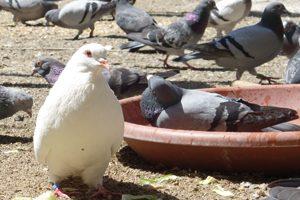 Wünsche für den Lebenshof der Kölner Taubenhilfe