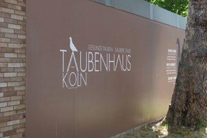 Betreuter Taubenschlag am Hansaring Köln